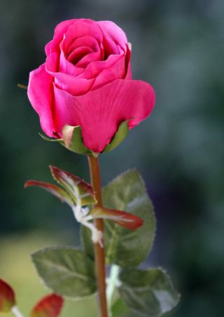 Rose Bud medium