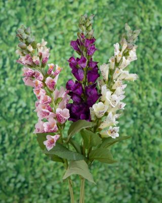 Foxgloves-