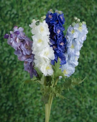 Delphiniums Double Flowers