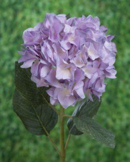 Hydrangea Bright Lavender