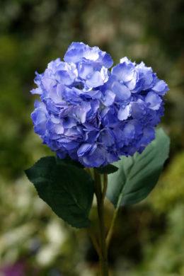 Hydrangea  Dark Blue