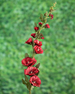 Hollyhocks Red
