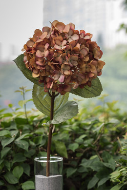 Hydrangea Mixed  Russet Colours