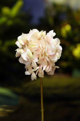 Hydrangea - Short Stem Pale Pink