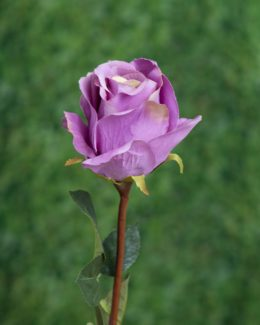 Large Bud Rose