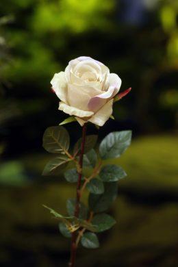 Large Rose Bud Vintage Pink