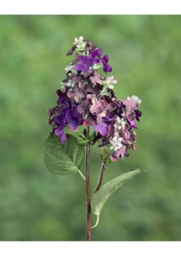 Lilac Mauve - Short stem
