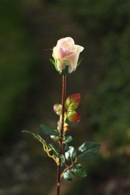 Med Rose Bud - Vintage Pink