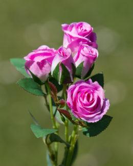 Mini Rose Spray