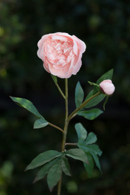 Peony- Blush Pink  Frilled Petals  with bud