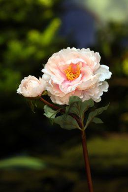 Peony - With Bud Pale Pink