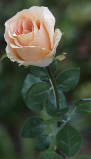 Rose bud large apricot mezu silk flowers rose bud large apricot mightylinksfo