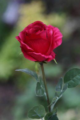 Rose Bud Large Red