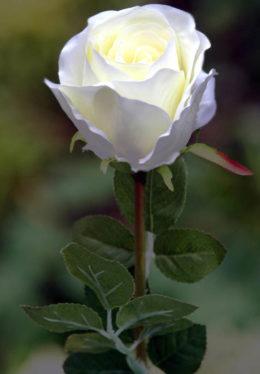 Rose Bud Large Ivory