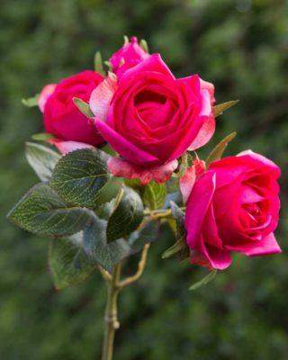 Rose large bud spray