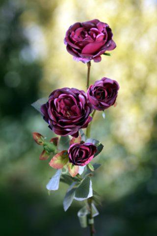 Spray Med Old English  Roses x 4 Heads  Dark Red