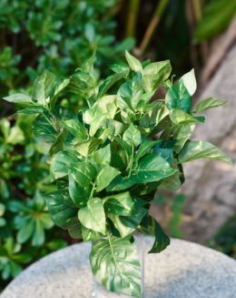 Variegated bunch leaves -