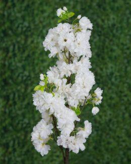 Blossom Stem White